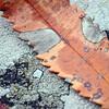 Lichen and Leaf