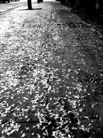B&W Leaves