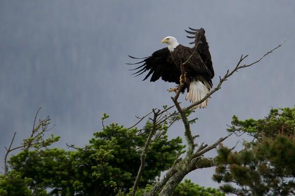 Double Eagle.