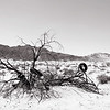 The Mojave Tire Tree