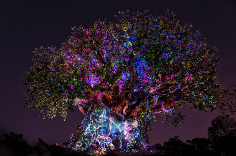 Animal Kingdom - Tree Of Life Awakenings