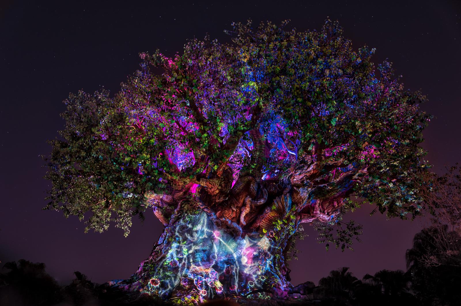 Animal Kingdom - Tree Of Life Awakenings