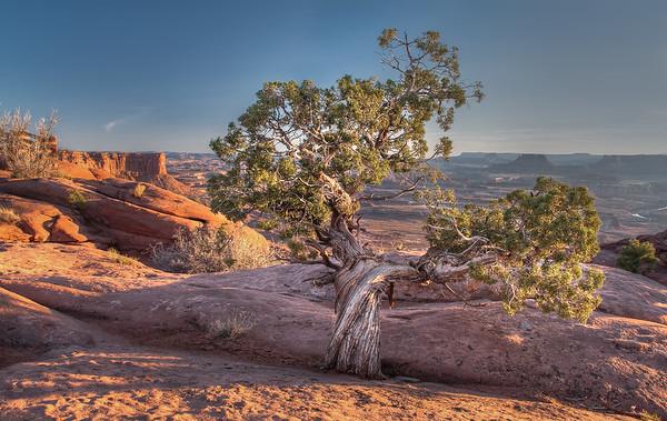 Canyonlands Sentinel