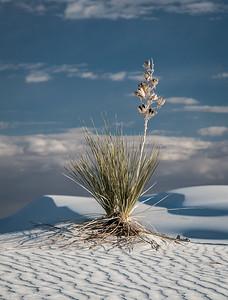 White Sands Sentinel