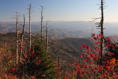 Clingman's Dome view