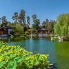 Chinese Garden with Lotus flowers.