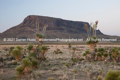 Yucca and Alamo Mountain at Twilight