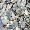 oyster shells PR