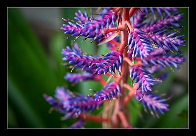new-flowers-56