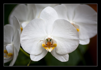 new-flowers-1