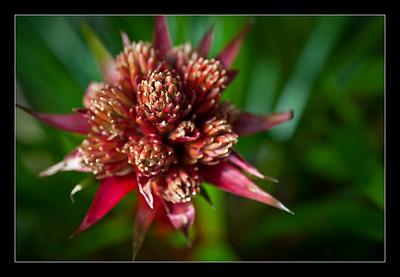 new-flowers-60