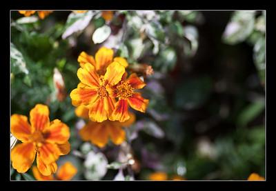 new-flowers-82