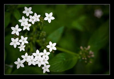 new-flowers-39