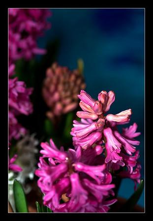 new-flowers-43