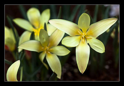 flowers-29