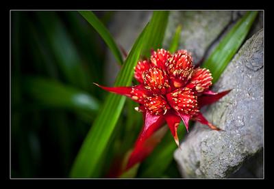 new-flowers-54