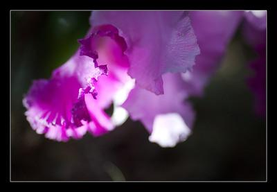 new-flowers-75