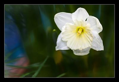 new-flowers-31