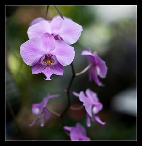 flowers-41