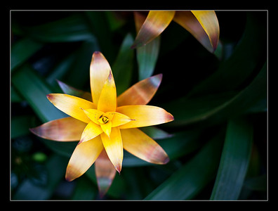 flowers-45
