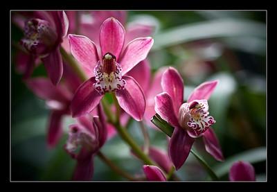 new-flowers-34