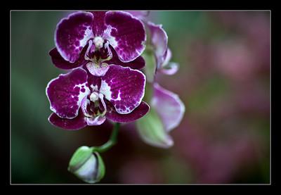 new-flowers-72