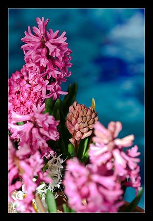 new-flowers-44
