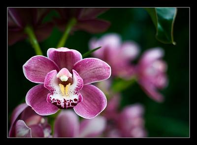flowers-46
