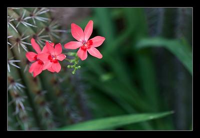 flowers-24