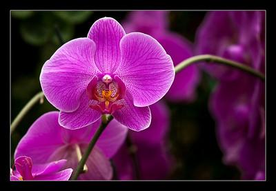new-flowers-104