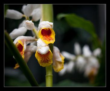 flowers-33
