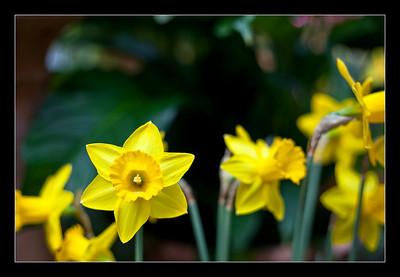 new-flowers-99