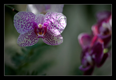 new-flowers-79