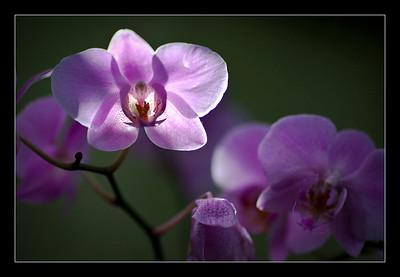 new-flowers-74