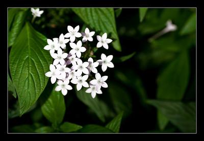 new-flowers-41