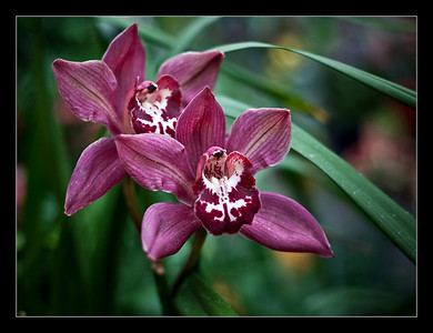 flowers-44