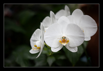 flowers-47