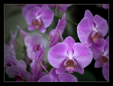 flowers-43