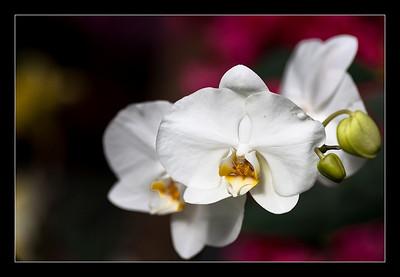 new-flowers-38