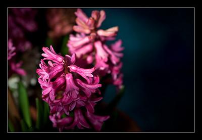 new-flowers-42