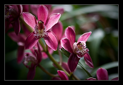 new-flowers-33
