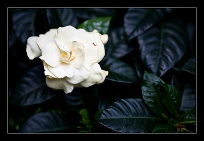 new-flowers-30