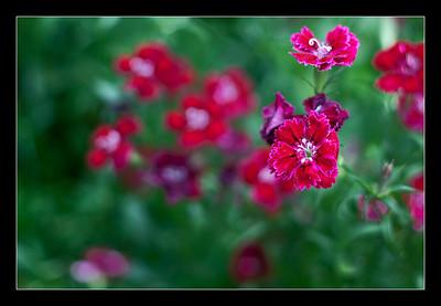 new-flowers-98
