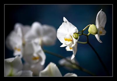 new-flowers-37