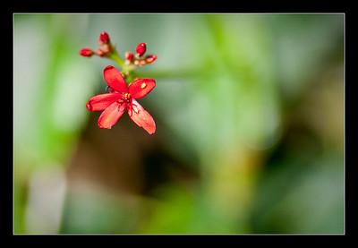 new-flowers-70