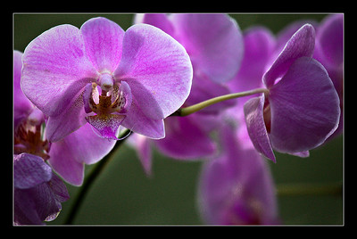 flowers-38