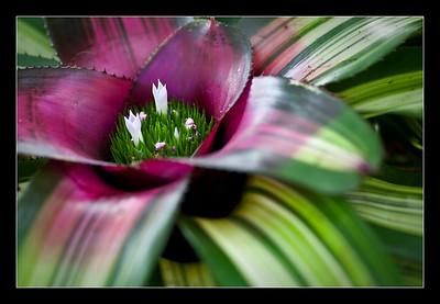 new-flowers-65