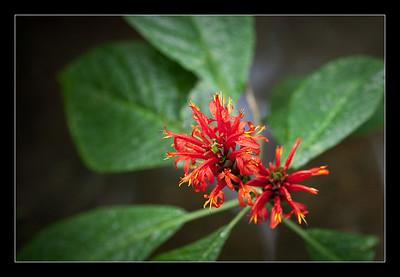 new-flowers-50