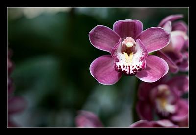 new-flowers-95