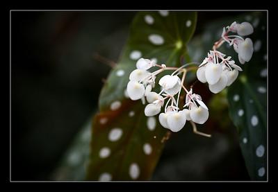 new-flowers-47